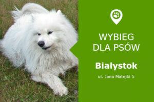 Wybieg dla psów, Białystok, ul. Jana Matejki 5, Park Miejski, podlaskie