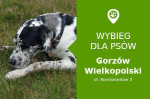 Wybieg dla psów, Gorzów Wielkopolski, ul Kombatantów 3, Park Górczyński, lubuskie
