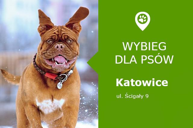 Wybieg dla psów Katowice, Park Bogucki, dzielnica Bogucice, slaskie