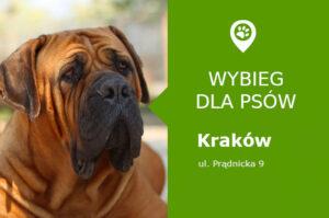 Wybieg dla psów Krakow, Park Kleparski, dzielnica Prądnik Biały, malopolskie