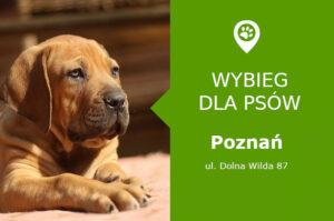 Wybieg dla psów, Poznań, dzielnica Dębiec, Park im. Jana Pawła II, wielkopolskie