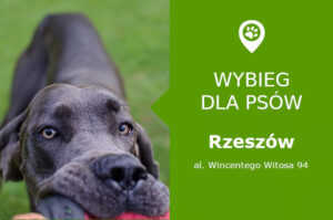 Wybieg dla psów, Rzeszów, al. Wincentego Witosa 94, Park Zdrowia, podkarpackie