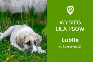 Psi park Lublin