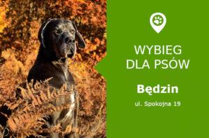 Wybieg dla psów Będzin, ul. Spokojna 19, przy Targowisku miejskim, slaskie