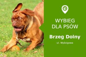 Wybieg dla psów Brzeg Dolny, Wyścigowa, osiedle Fabryczna, boisko Orlik, dolnośląskie