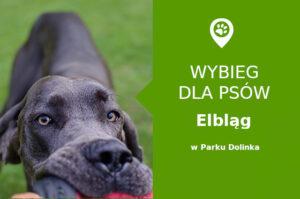 Wybiegu dla psów Elbląg park dolinka warmińsko mazurskie