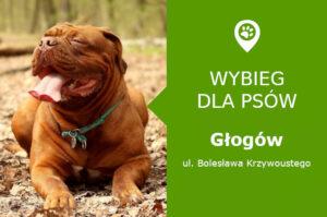 Wybieg dla psów Głogów, ul. Bolesława Krzywoustego, Park Leśny, dolnośląskie