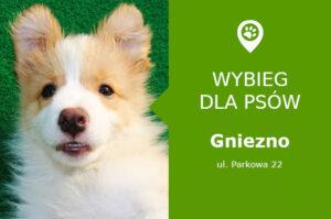 Wybieg dla psów Gniezno, Park Gnieźninek, wielkopolskie