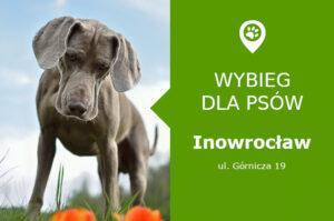 Wybieg dla psów Inowrocław, ul. Górnicza 19, przy Skwerze Kombatantów, kujawsko-pomorskie