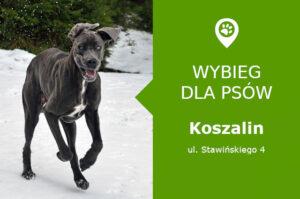 Wybieg dla psów Koszalin, ul. Stawińskiego 4, przy stadionie, zachodniopomorskie