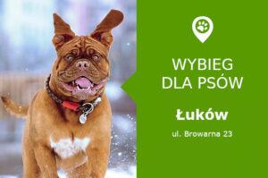 Wybieg dla psów Łuków, Browarna 23, park miejski przy skatepark, lubelskie
