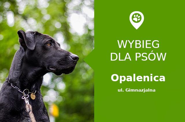 Wybieg dla psów Opalenica, ul. Gimnazjalna, przy targowisku miejskim, wielkopolskie