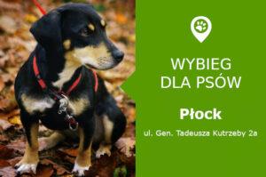 Wybieg dla psów Płock, ul. Gen. Kutrzeby 2a, mazowieckie