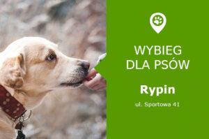 Wybieg dla psów, Rypin, ul. Sportowa 41, obszar MOSiR, kujawsko-pomorskie