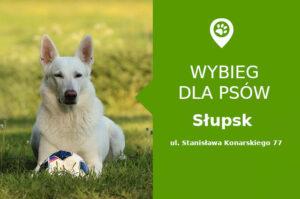 Wybieg dla psów Słupsk, ul. Stanisława Konarskiego 18, pomorskie