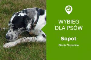 Wybieg dla psów Sopot, ul. Bitwy pod Płowcami, Błonia Sopockie, pomorskie