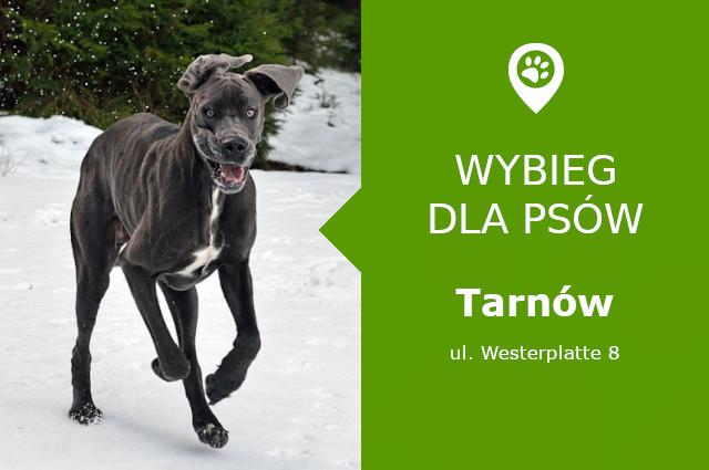 Wybieg dla psów Tarnów, ul. Westerplatte 8, przy Parku Westerplatte, małopolskie
