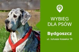 Plac zabaw dla psów Bydgoszcz