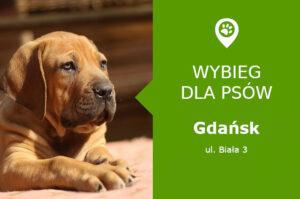 Plac zabaw dla psów Gdańsk, ul. Biała 3, dzielnica Wrzeszcz, pomorskie
