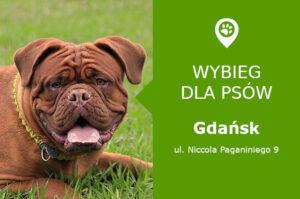 Plac zabaw dla psów Gdańsk, ul. Niccola Paganiniego 9, dzielnica Suchanino, orlik, pomorskie