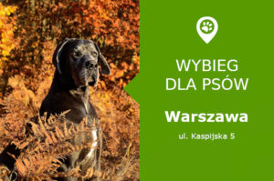 Plac zabaw dla psów Warszawa, Kaspijska 5, Mokotów, Stegny, mazowieckie