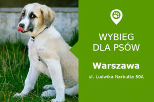 Plac zabaw dla psów Warszawa, Ludwika Narbutta 50A, Stary Mokotów, dzielnica Mokotów, kino Iluzjon, mazowieckie