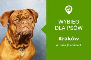 Psi park Krakow, Jana Kurczaba 9, Prokocim, malopolskie