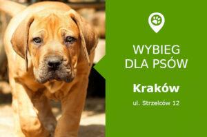 Psi park Krakow, Strzelców 12, dzielnica Prądnik Czerwony, Komisariat policji III, malopolskie