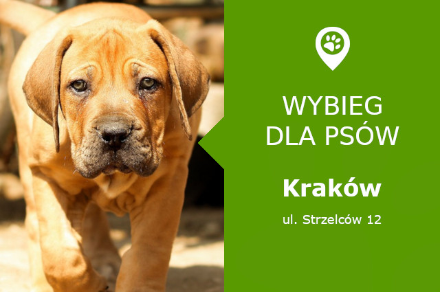 Psi park Krakow
