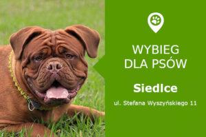 Psi park Siedlce,ul. Prymasa Stefana Wyszyńskiego 11, przy sklepie Biedronka, mazowieckie
