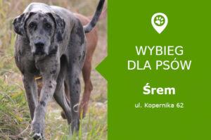 Psi park Śrem, ul. Kopernika 62, przy Szkole Podstawowej nr 6, wielkopolskie