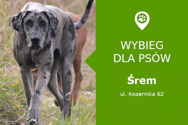 Psi park Śrem