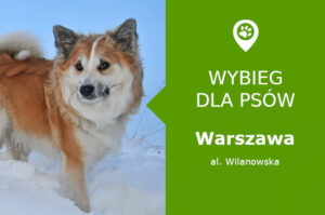 Psi park Warszawa, aleja Wilanowska, plaża Wilanowska, dzielnica Wilanów, mazowieckie