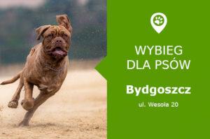 Wybieg dla psów Bydgoszcz