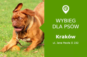 Wybieg dla psów Krakow, Jana Pawła II 232, Nowa Huta, Nowohuckie Centrum Kultury, malopolskie