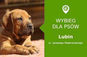 Wybieg dla psów Lubin, ul. Ignacego Paderewskiego, w Parku Słowiańskim, dolnośląskie