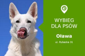Wybieg dla psów Oława, ul. Rybacka 31, pomiędzy Odrą a Oławą, dolnośląskie