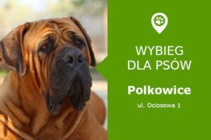 Wybieg dla psów Polkowice, ul. Ociosowa 1, przy Szkole Podstawowej nr 3, dolnośląskie