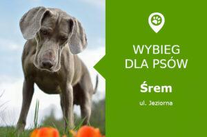 Wybieg dla psów Śrem, ul. Jeziorna, Jezioro Grzymiesławskie, wielkopolskie