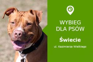 Wybieg dla psów Świecie, ul. Kazimierza Wielkiego, wzgórze przy jeziorze Duży Blankusz, kujawsko-pomorskie