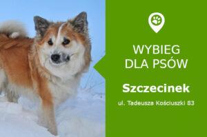 Wybieg dla psów Szczecinek, ul. Tadeusza Kościuszki 83, Jezioro Trzesiecko, zachodniopomorskie