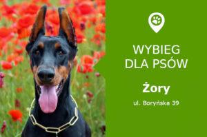 Wybieg dla psów Żory, ul. Boryńska 39, osiedle Księcia Władysława, slaskie