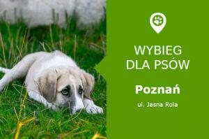 Dog park Poznań, ul. Jasna Rola, dzielnica Naramowice, rezerwat przyrody Żurawiniec, wielkopolskie