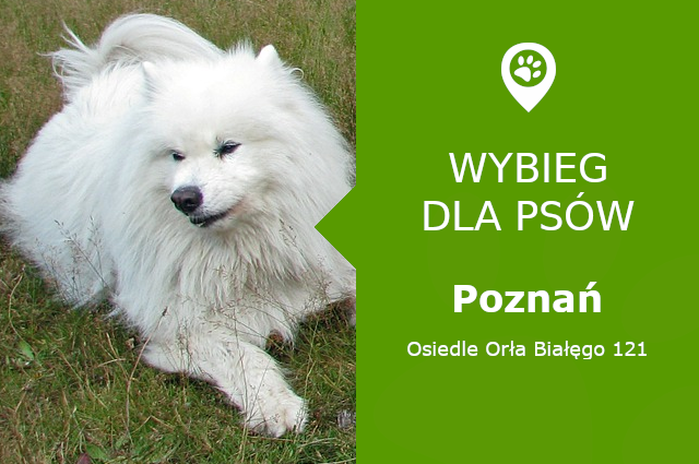 Plac zabaw dla psów Poznań, Osiedle Orła Białęgo 121, dzielnica Żegrze, wielkopolskie