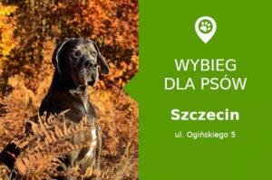 Plac zabaw dla psów Szczecin, Ogińskiego 5, dzielnica Łękno, Park Kasprowicza, zachodniopomorskie