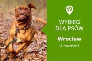 Plac zabaw dla psów Wrocław, Kaszubska 5, dzielnica Nadodrze, dolnośląskie