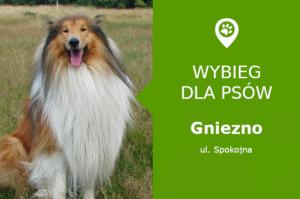 Psi park Gniezno, ul. Spokojna, osiedle Ustronie, przy GOSIR, wielkopolskie