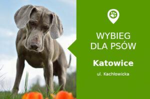 Psi park Katowice, Kochłowicka, Osiedle Witosa, przy przystanku, slaskie