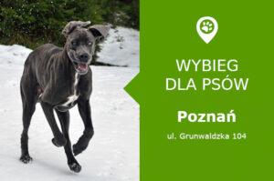 Psi park Poznań, ul. Grunwaldzka 104, dzielnica Grunwald Południe, wielkopolskie