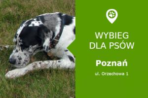 Psi park Poznań, ul. Orzechowa 1, dzielnica Dębiec, Park Bambrów, wielkopolskie